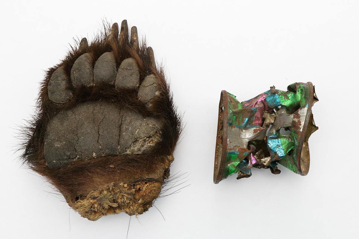 A bear's paw and a can from which the bear ate.