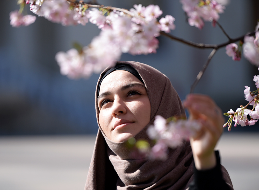 A girl gazes at the bloom of cherry blossoms in Grozny.