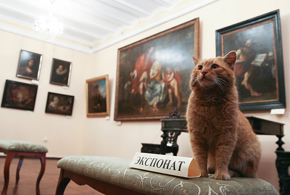 MOSCOW REGION, RUSSIA. APRIL 7, 2016. Marai the cat at Serpukhov's Museum of History and Art. April Fools' joke about a cat that scratched a job application and was hired by the museum turned real under the public pressure. Marai's candidature was approved by the museum's managers, the cat will receive fish and meat patties as salary.