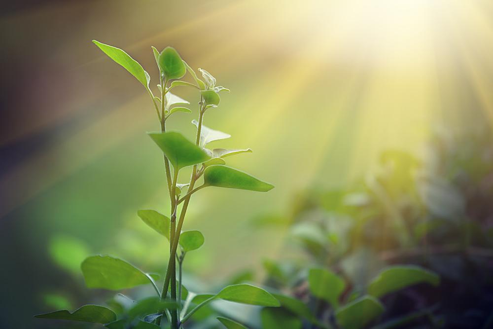 Fotossíntese permite transformar luz em energia com aproveitamento de 90%