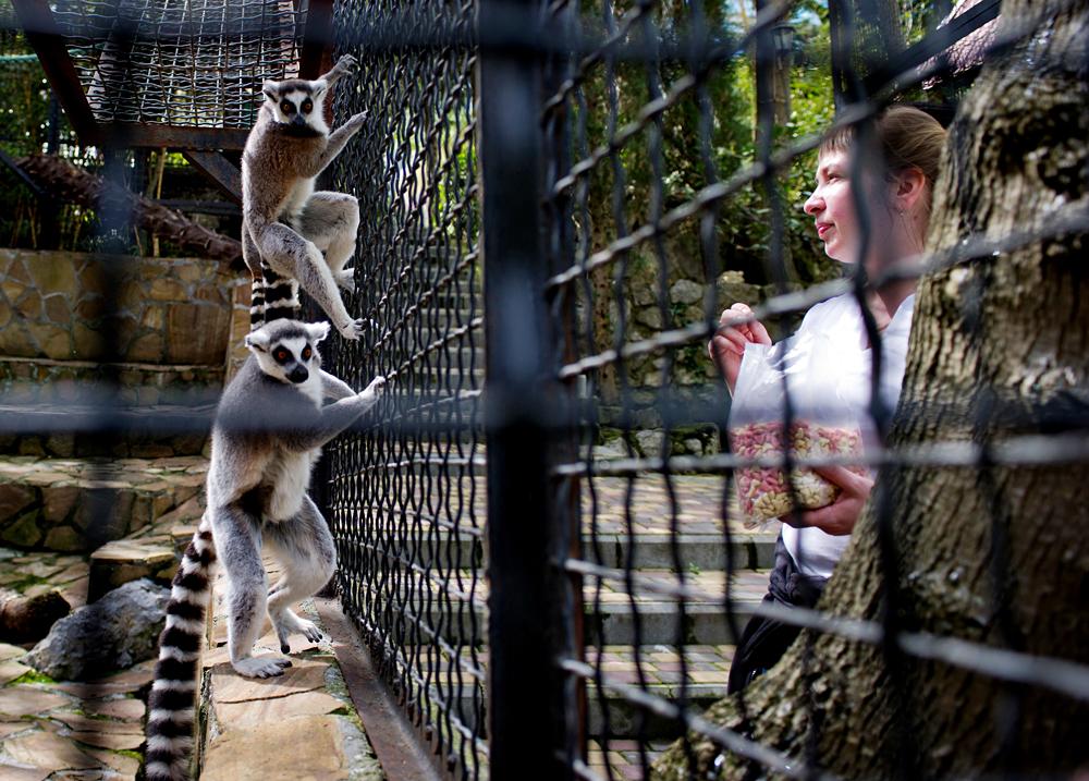 """Посетительница новь открывшегося зоопарка """"Сказка"""" в Ялте у вольера с лемурами."""
