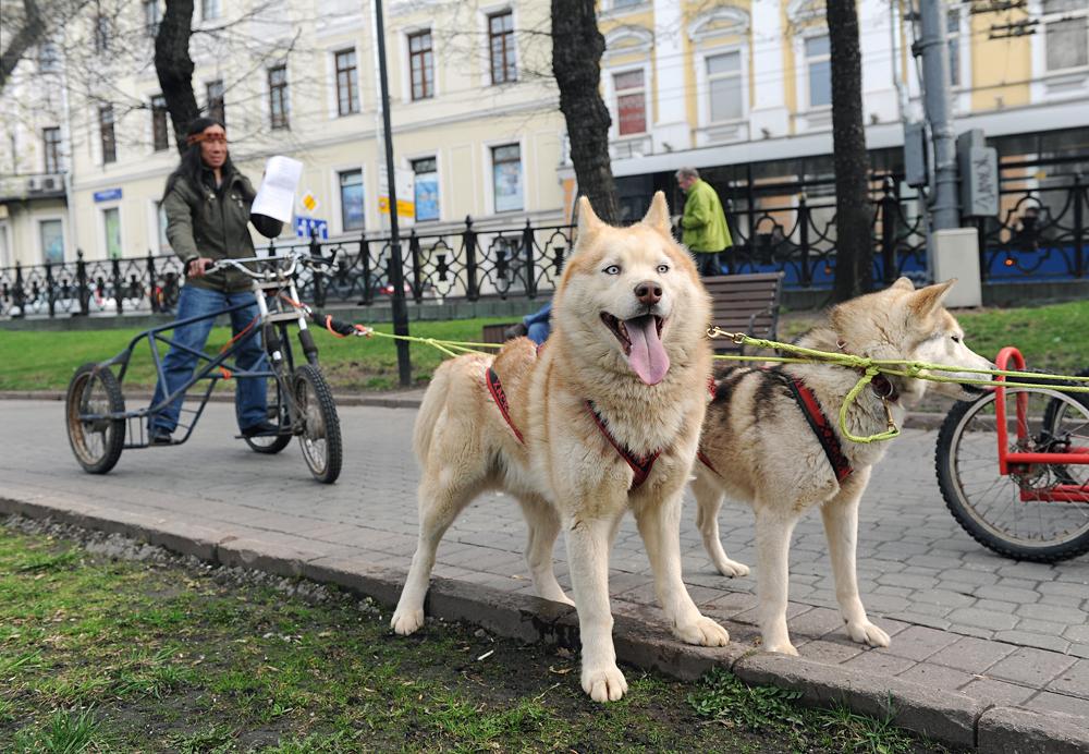 Участники акции, жители Крайнего Севера на национальных собачьих упряжках во время старта в приёмную Министерства промышленности и торговли России для вручения петиции об отмене утилизационного сбора на снегоходы.