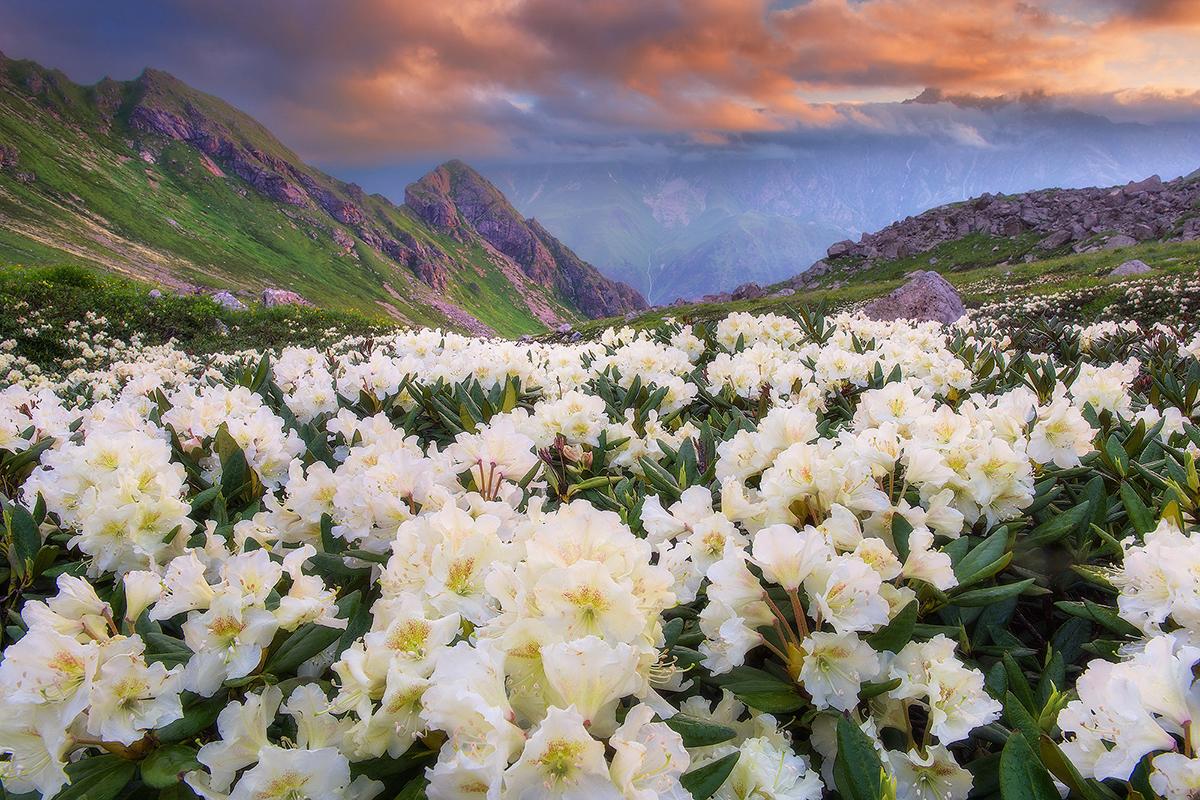 Severna Osetija – Alanija je republika na ruskem delu Kavkaza, ki na zahodu meji na republiko Kabardino-Balkarija, na severu na Stavropolski kraj, na vzhodu na Čečenijo in Ingušetijo, na jugu pa na Gruzijo.