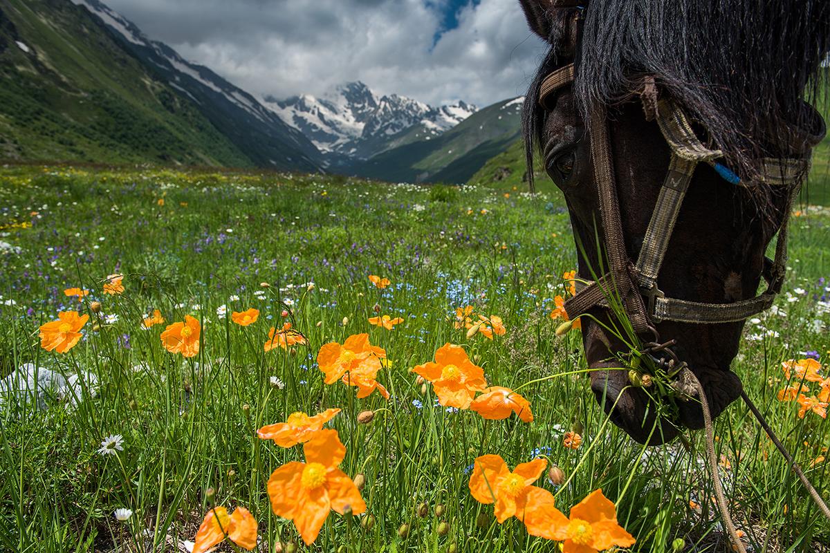 Der Frühling kommt hier spät an. Zu Frühlingsbeginn sind große Felder mit einem farbigen Teppich aus blühendem buntem Grass und Bergmohn bedeckt.