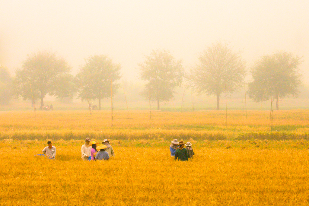 Farmers in Pang Mapha, Thailand.
