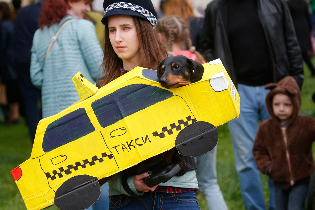 "The Russian name for ""dachshund"" is taksa, so each year there are some dogs dressed as taxi cars."