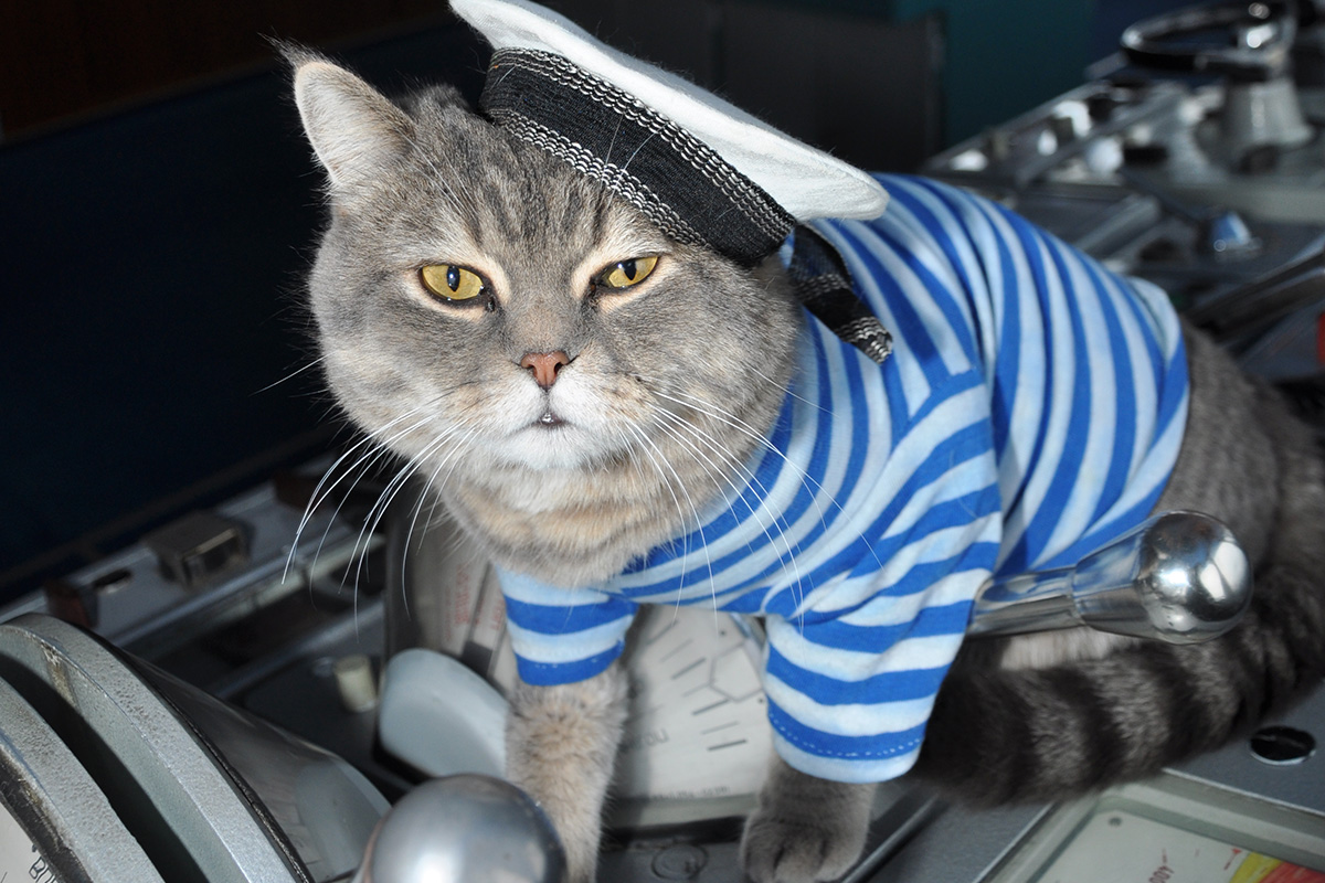 Image result for cat on a ship