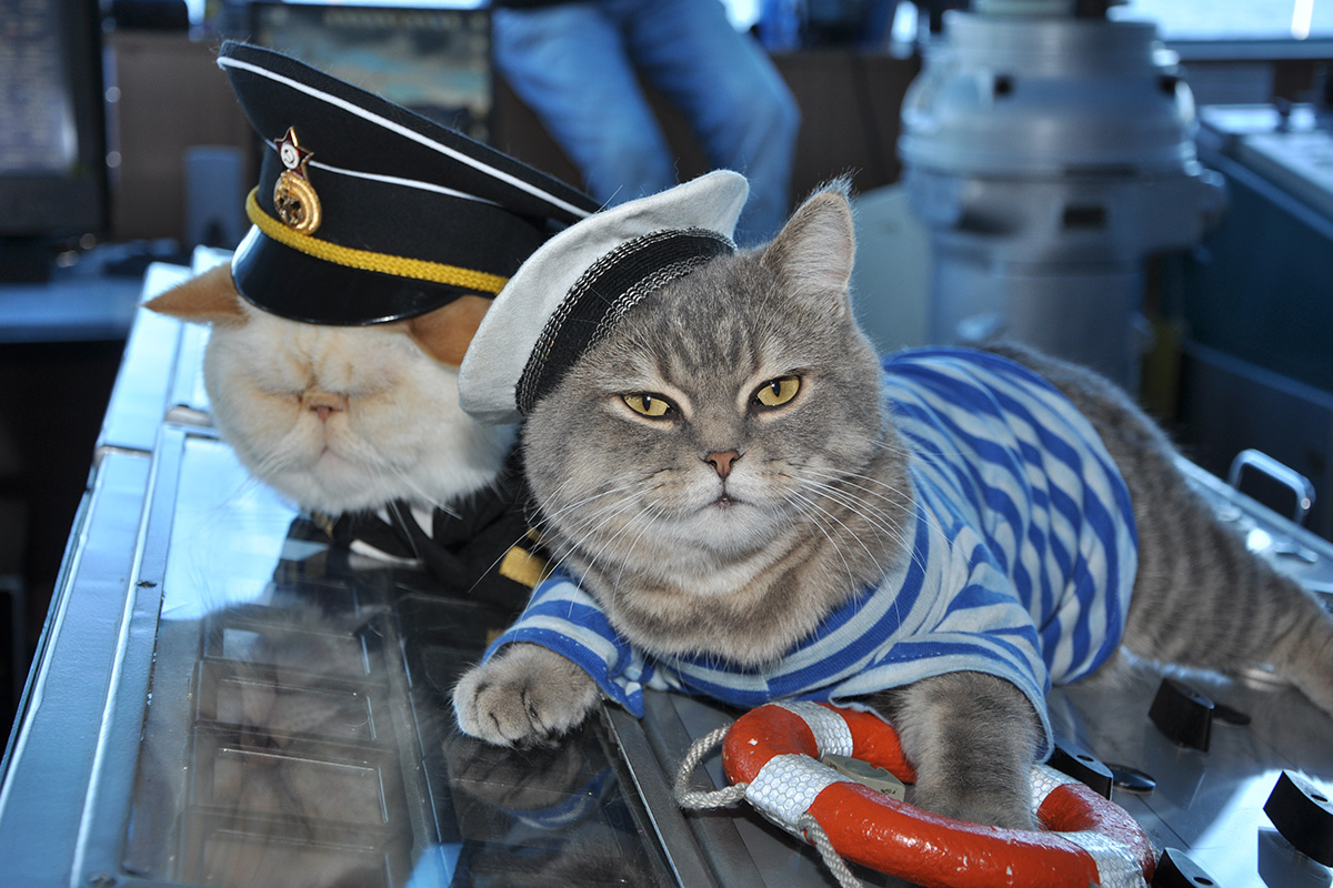 One cat is called Botsman (left), which is Russian for 'boatswain'.