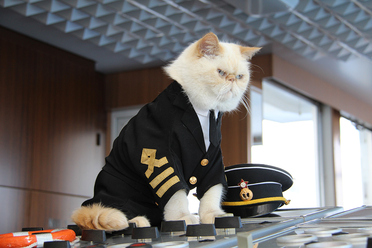 During the winter the cats live in the captain's home. It is no coincidence that his name is Vladimir Kotin ('kot' in Russian is 'cat').