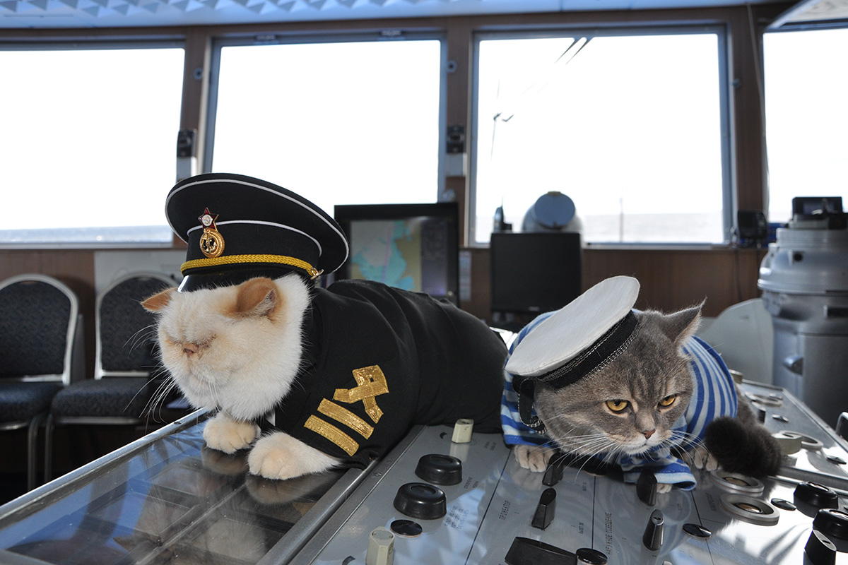 The passengers' beloved pets are often seen sleeping in the captain's deckhouse. Each cat has its own outfit, but Botsman mainly prefers to play with his peak cap instead of wearing it.