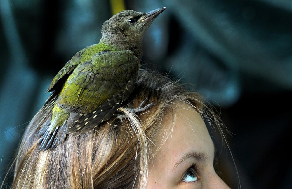Un pito cano sobre la cabeza de una chica cerca del pueblo de Vasilievskoe, unos 90 km al oeste de Moscú.