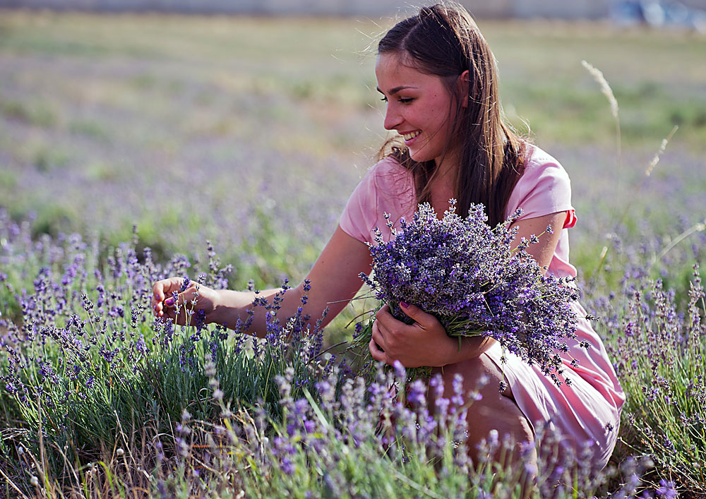 Lavender blooming in Crimea