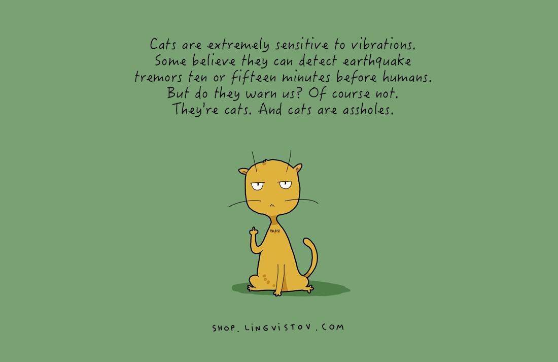 Котките са изключително чувствителни към вибрациите. Някои смятат, че те могат да предусещат земетресения10-15 минути преди хората.Но дали ни предупреждават? Разбира се, че не.Те са котки. А котките са гадняри.