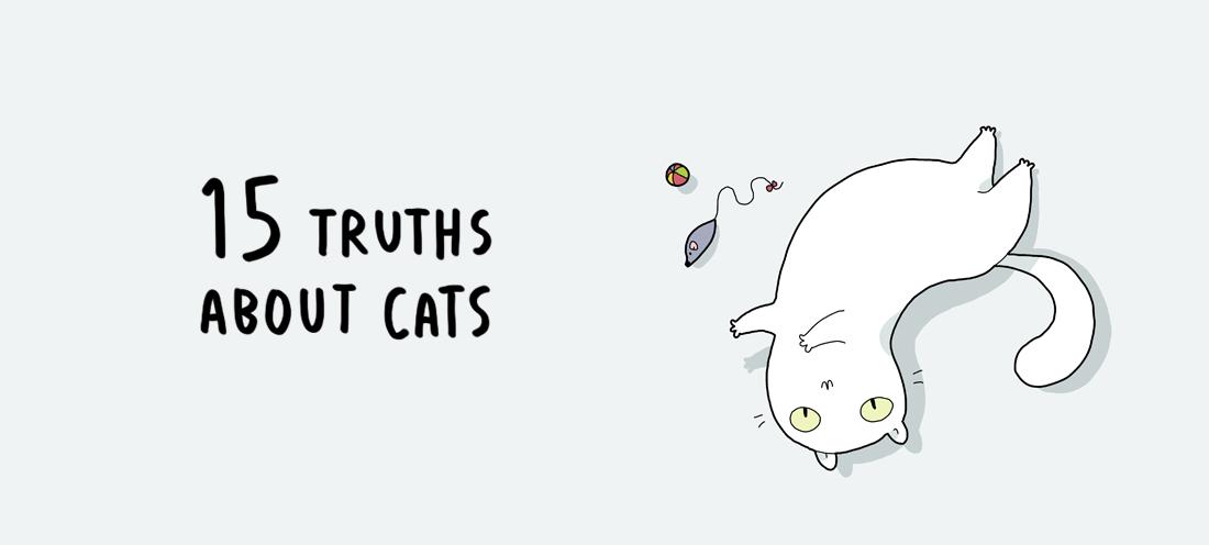 15 истини за котките