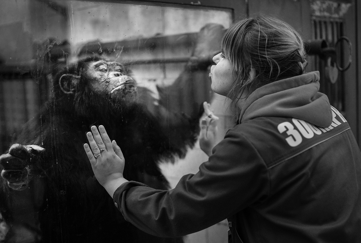 """Every morning Olga pays a visit to her fosterlings. She talks to them, examines them, gives them vitamins. Bonya is the head of the chimpanzee family. He loves these moments, especially if his visitor is a girl,"" Sergey told us."