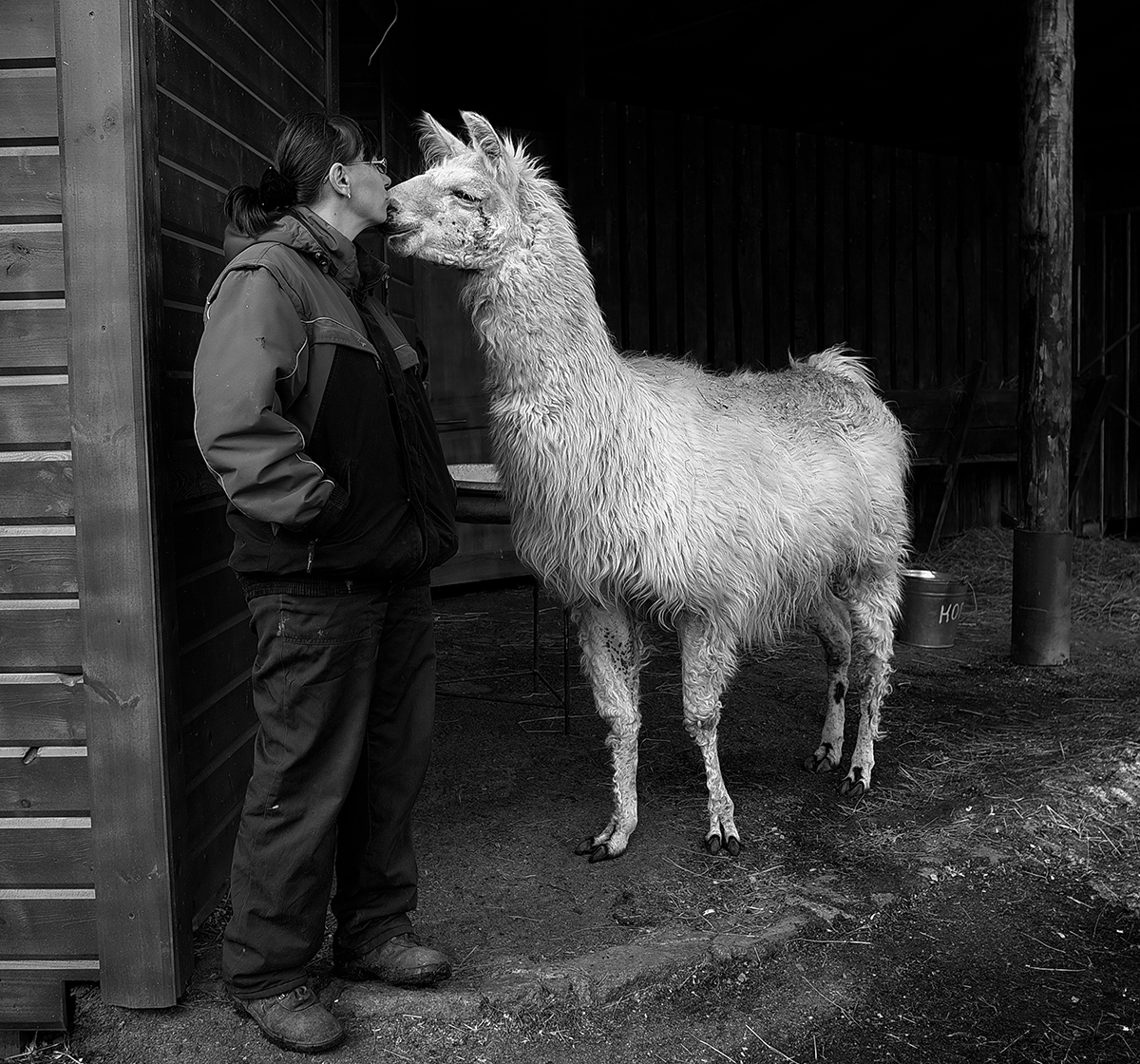 """I was fascinated by the courage and dedication of these people. They readily perform tasks that require physical strength and often work extra shifts and sacrifice their free time, even if the pay leaves a lot to be desired."" // Galya, head zoologist, and Chizhik the llama"