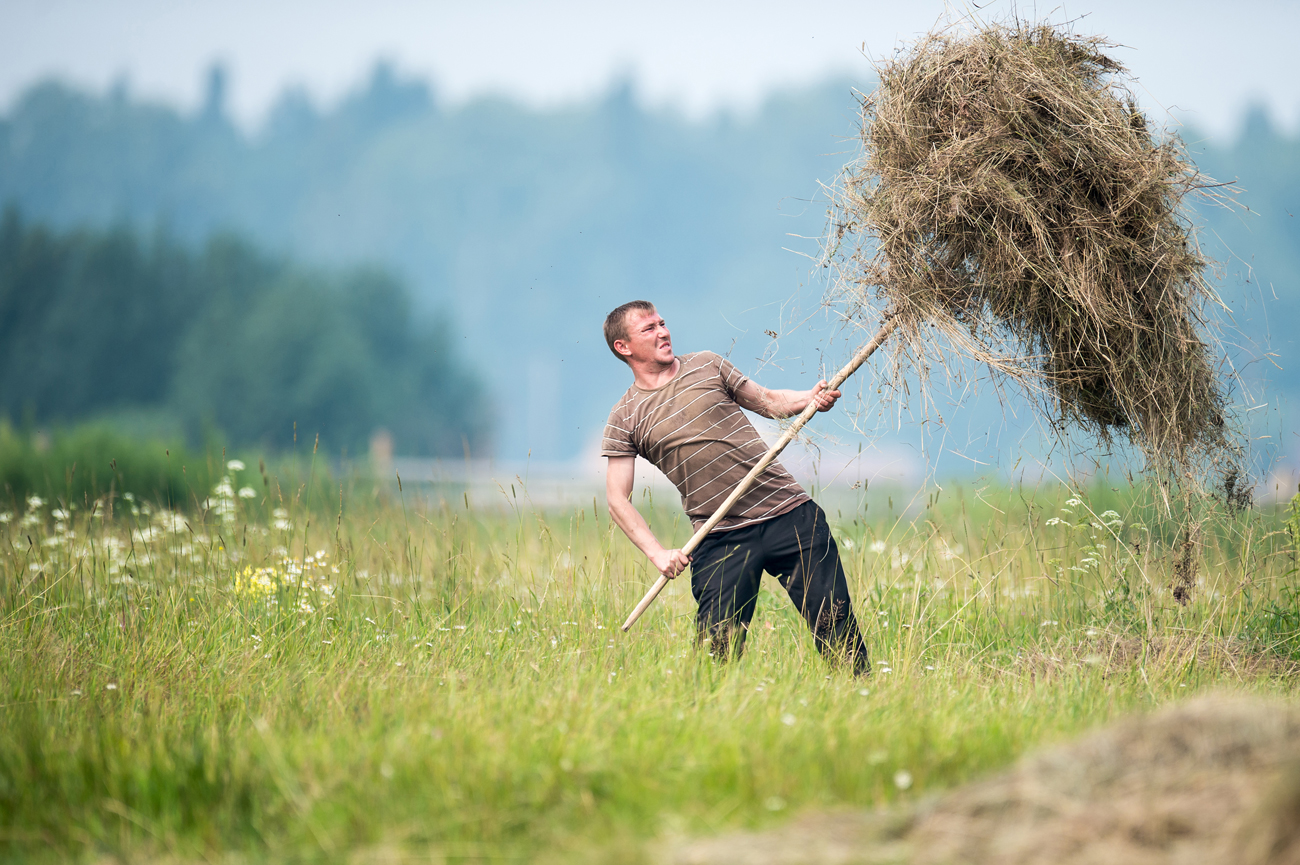 Hay making in Omsk RegionЖитель деревни Баженово Омской области во время заготовки сена.