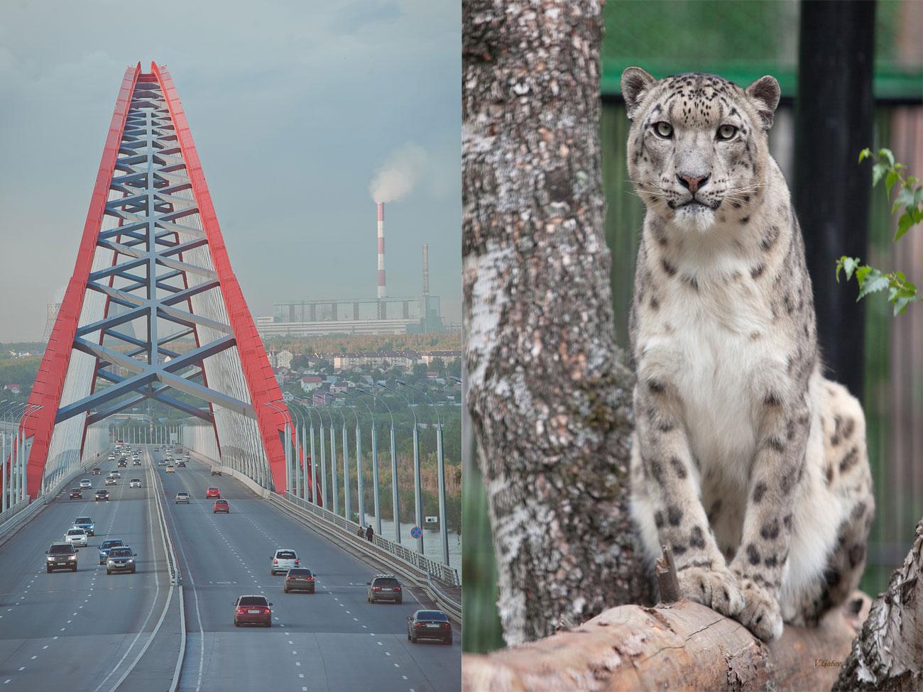 През август Централната банка планира да проведе гласуване, за да избере едно от 10-те най-номинирани предложения. / Новосибирск, най-големият град в Сибир, е известен с живописния си Бугрински мост и прочутата си зоологическа градина, където живее редкият снежен леопард.