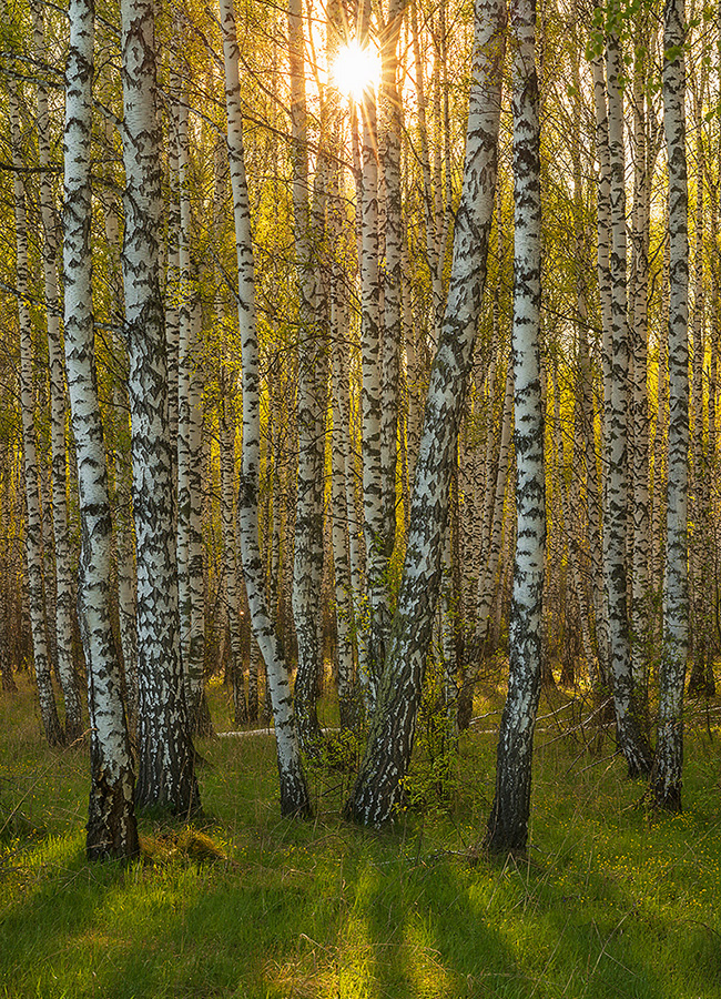 """Las montañas de Altái, consideradas por algunos como la """"farmacia"""" de la Tierra y los """"pulmones"""" del planeta, es una de las regiones más limpias y menos contaminadas de Rusia."""