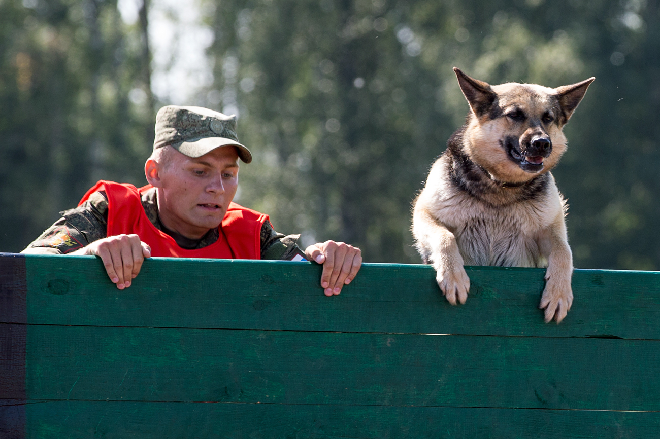 A serviceman and a dog run the 300-meter obstacle course race during the True Friend competition among dog handlers at the Krasnaya Zvezda [Red Star] dog breeding kennel in the Moscow Region. The race is part of the 2016 Army Games, an international event organized by the Russian Defense Ministry.