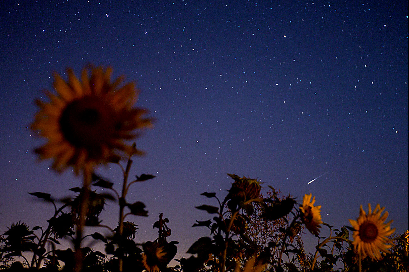 TATARSTAN, RUSSIA - AUGUST 12, 2016: A view of the Perseid Meteor Shower from a sunflower field.