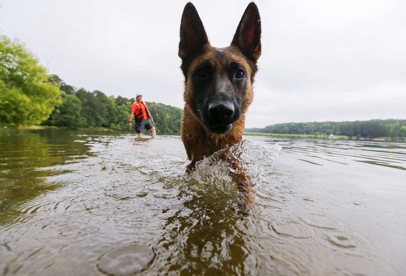 In recent tests dogs breathed underwater for up to 30 minutes.