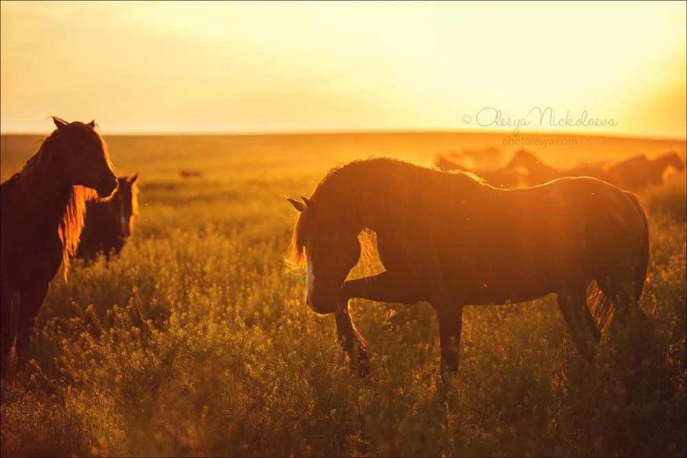 Дивљи коњи су једини житељи острва и једини његови господари.
