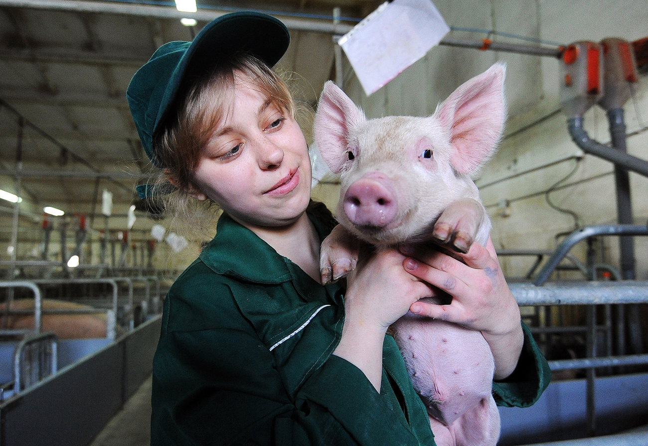 A worker of the Rodnikovsky pig-breeding farm holds a piglet. The farm specializes in raising and processing purebred pigs of meat breeds.