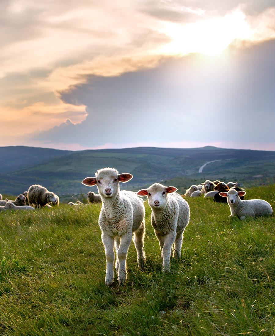 Fauna diversificada. Altai é lar de muitos animais, incluindo linces, leopardo-das-neves, cabras-das-montanhas da Sibéria, e cordeiros. A fauna nas reservas é extremamente diversa, com cerca de 50 espécies de mamíferos e centenas de aves.