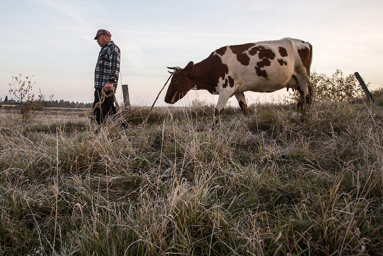 A native grazes his cow in the village of Keizes, Omsk Region.