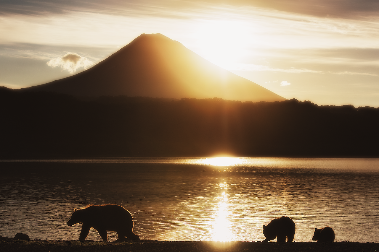 Ursa conduz seus filhotes ao longo da margem do lago Kurile ao amanhecer.