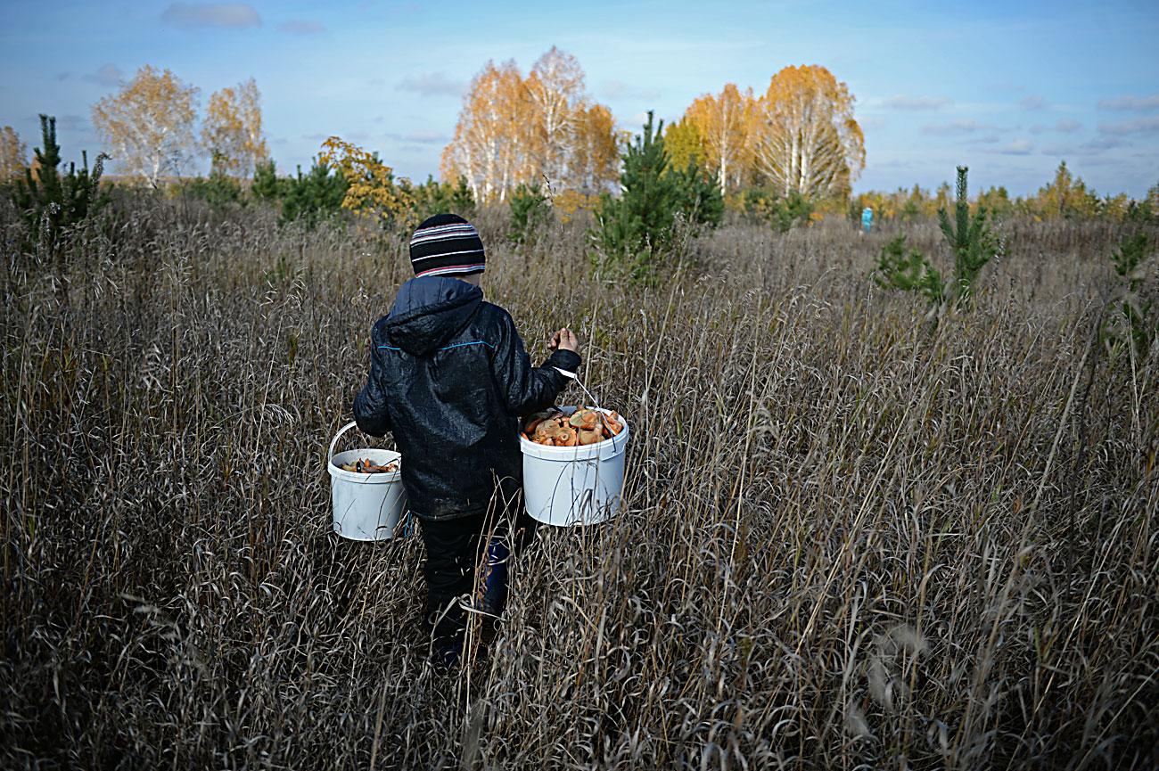 Момче собира рујници во Чељабинскиот регион.