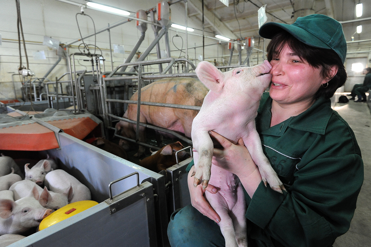 A worker with 1-month old piglet on the Rodnikovsky pig-breeding farm. Russia is looking to step up pork exports to Asia.