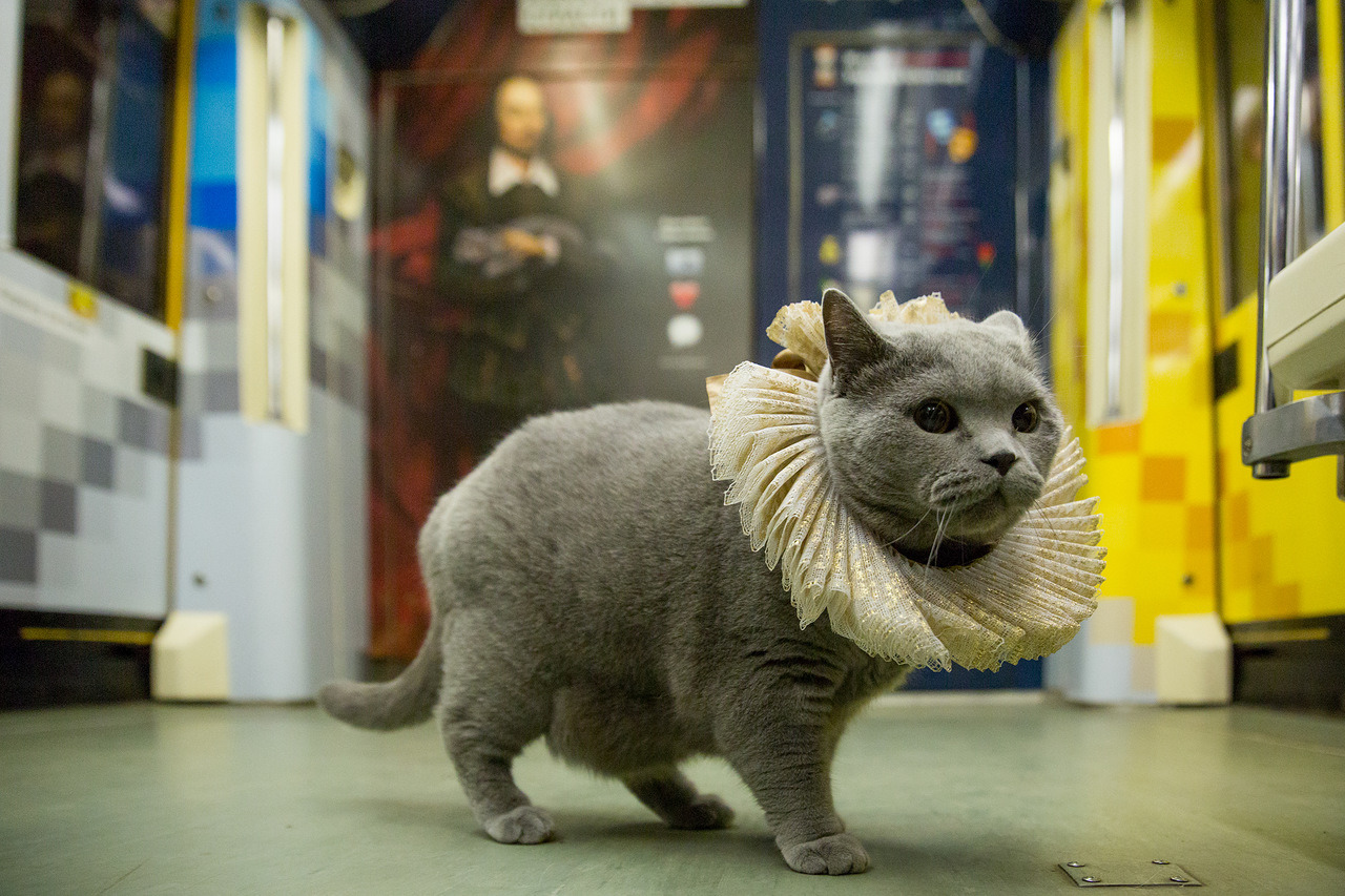 A cat in the Shakespeare train of Moscow metro