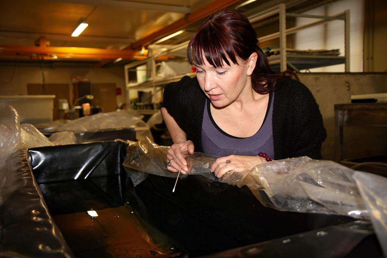 """L'archeologa Riikka Alvik mostra un pezzo del """"Frau Maria"""". Fonte: AFP / East News"""