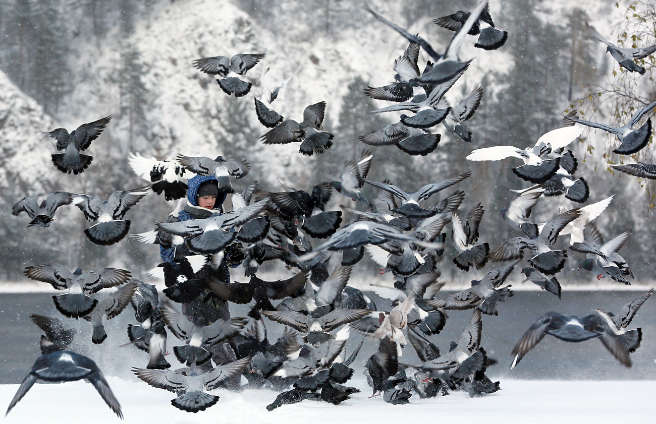 A boy feeds pigeons on a snow covered embankment of the Yenisei River in the Siberian town of Divnogorsk, Russia, October 27