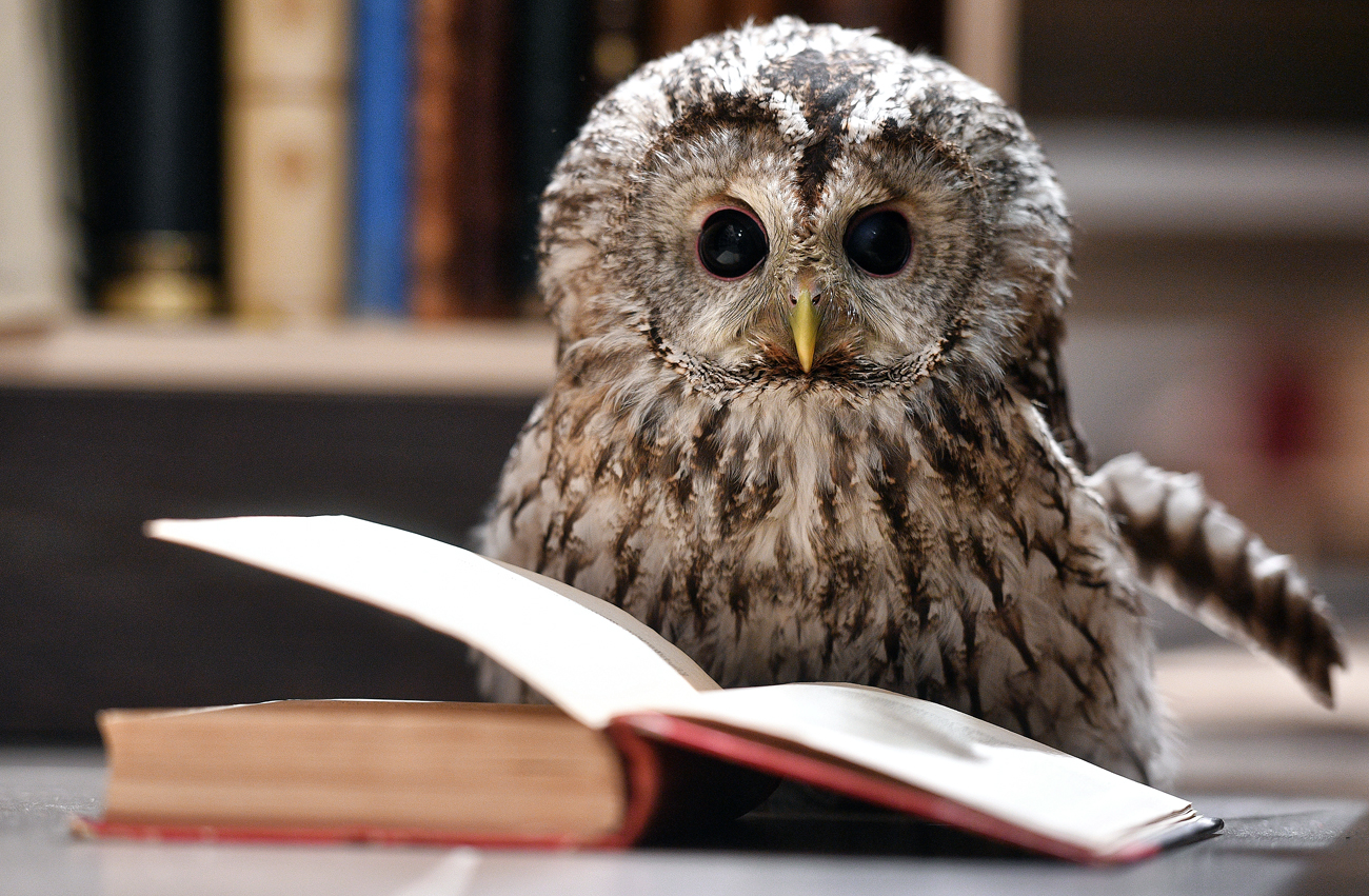 Yeva the Owl living at Moscow's Dom Knigi bookstore in Arbat