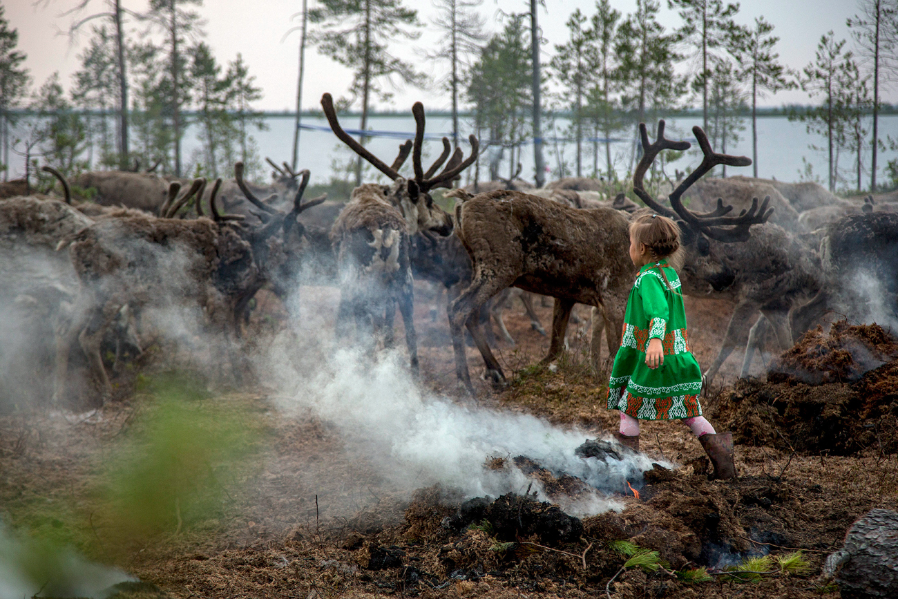 Margarita Moltanova, 5, plays with reindeers in the family traditional reindeer herding camp in Russia's northern Yamal Region. The indigenous reindeer herders in Russia's northern Yamal Region, a remote section of Siberia where winter temperatures can sink below minus 50 degrees Celsius, are facing a man-made threat as officials push ahead with an unprecedented culling that calls for at least one in seven of the Yamal's reindeer to be slaughtered