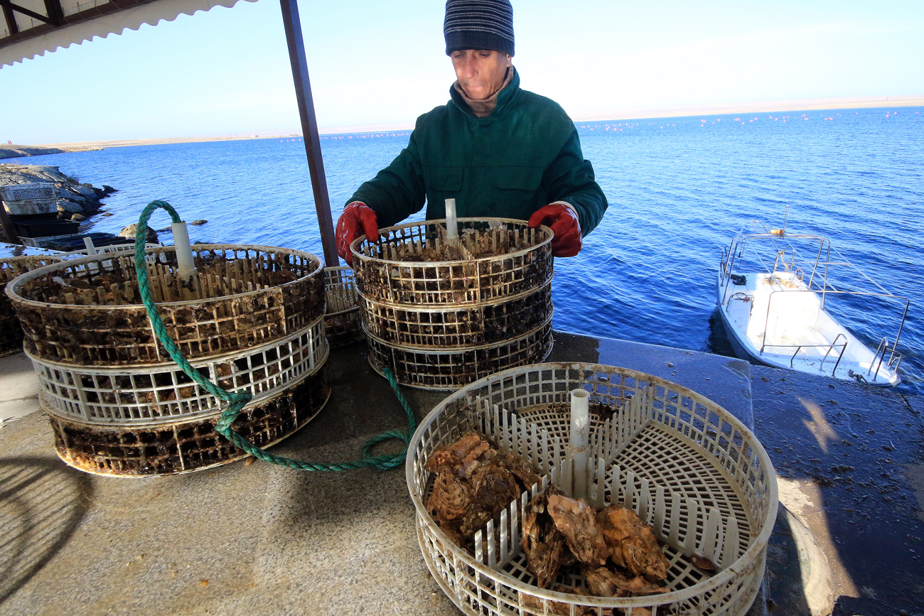 Placing an oyster cage underwater at an oyster and mussel farm on Lake Donuzlav in Crimea, Russia.