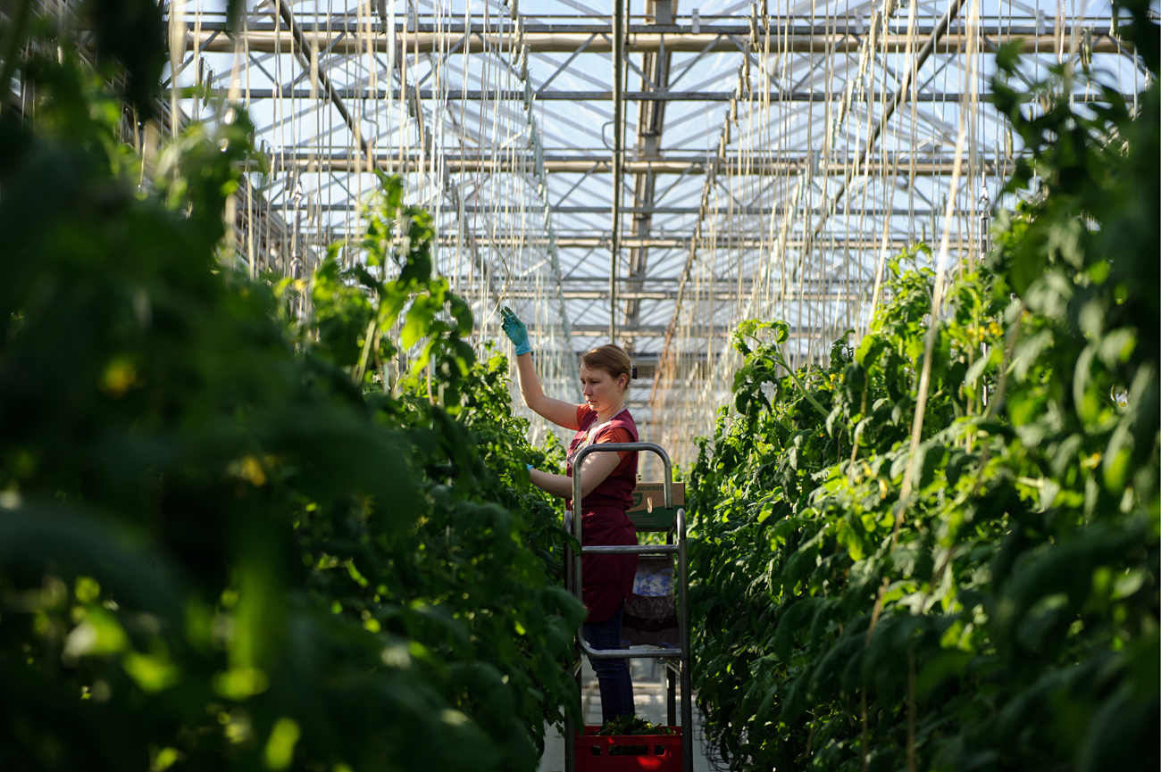 Greenhouse farms in Russia require a lot of energy to heat them in winter.