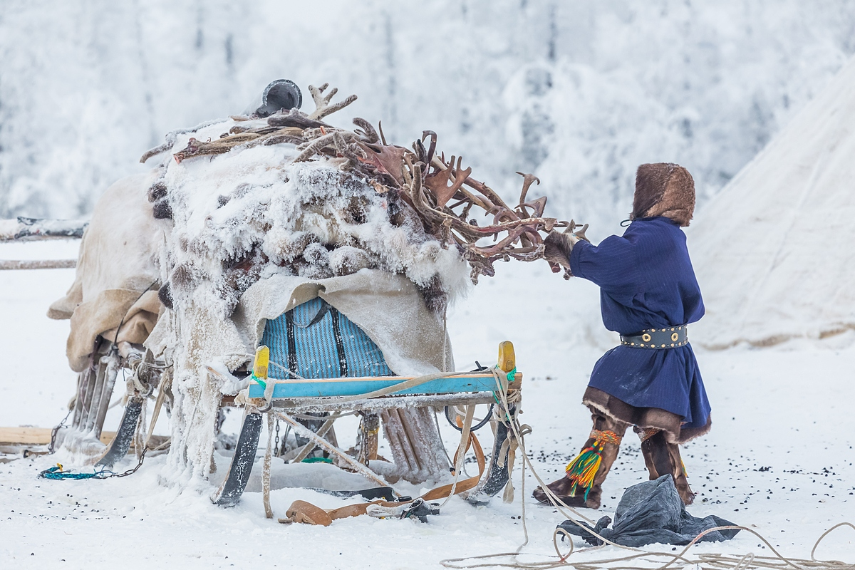 There are 41,000 indigenous people living in Yamal, including 15,000 nomads. These people essentially spend their whole lives following their reindeer herds from one pasture to another, bringing their tents and possessions with them on sleighs.