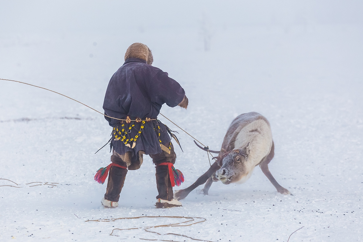 The second type is when a reindeer farm is run by hired workers. They are tasked with guarding pasture land, putting reindeer on range, as well as treating and looking after sick animals. However, they may be lacking the personal bond that links the herder and the reindeer when they know that the reindeer is theirs.