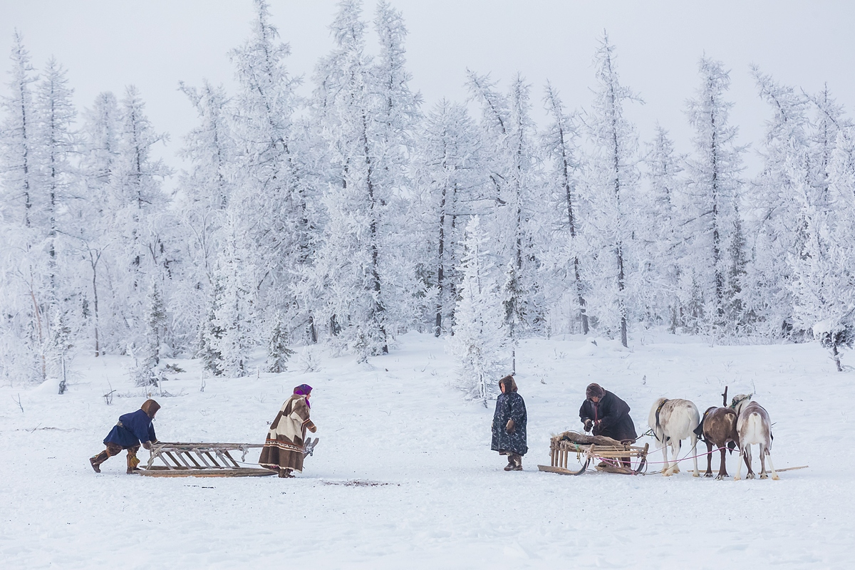 Keeping reindeer is quite expensive. Fodder – including oats, vegetables, and hay – costs at least 50,000 rubles ($1,500) a month; another 20,000 ($613) to 30,000 rubles ($919) is spent on utility bills, and 100,000 rubles on the farm payroll.