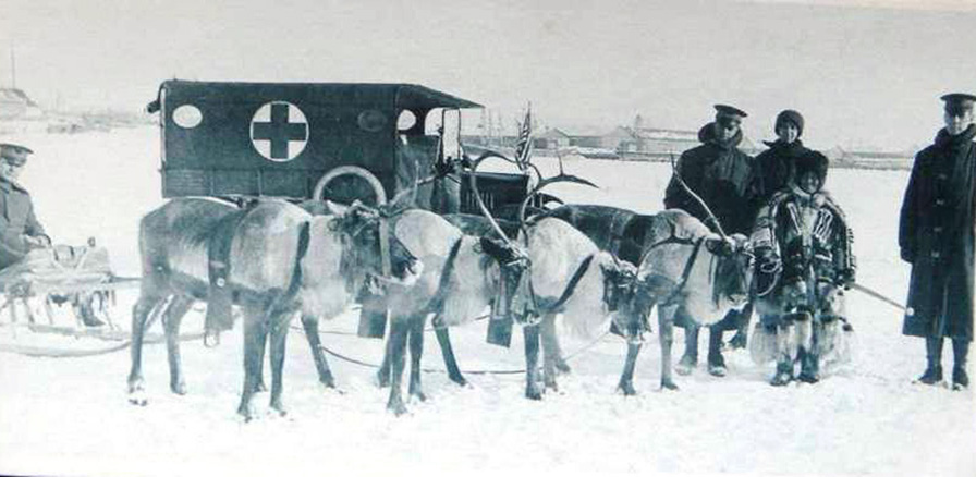 Sometimes winter sledges were pulled by deer, which are more used to the northern weather than horses.