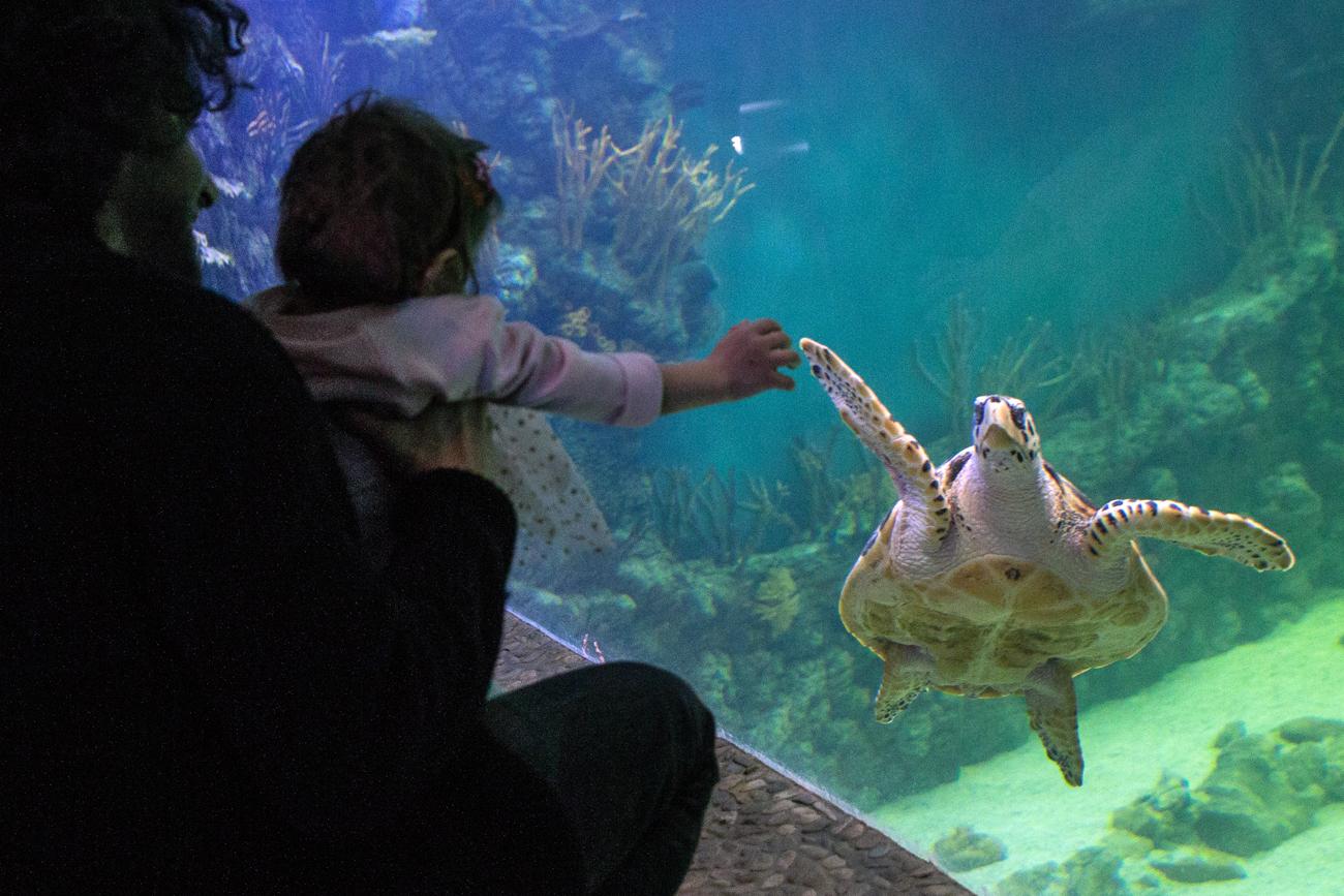 "Посетители на отворањето на Океанариумот ""Крокус Сити"""