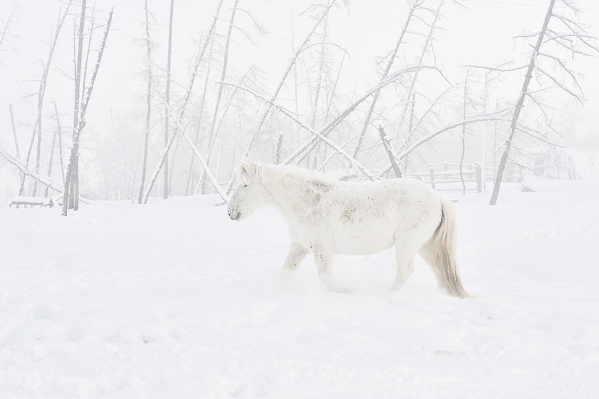 """""""Camminavo per strada e tutto sembrava fatto di ghiaccio. Era tutto così dolce: un gruppo di mucche tristi, il freddo sole coperto, la nebbia densa, i cavalli coperti di brina, il tè caldo con il latte che bevono tutti. Sono tornata indietro nel tempo, riassaporando i miei ricordi d'infanzia"""""""