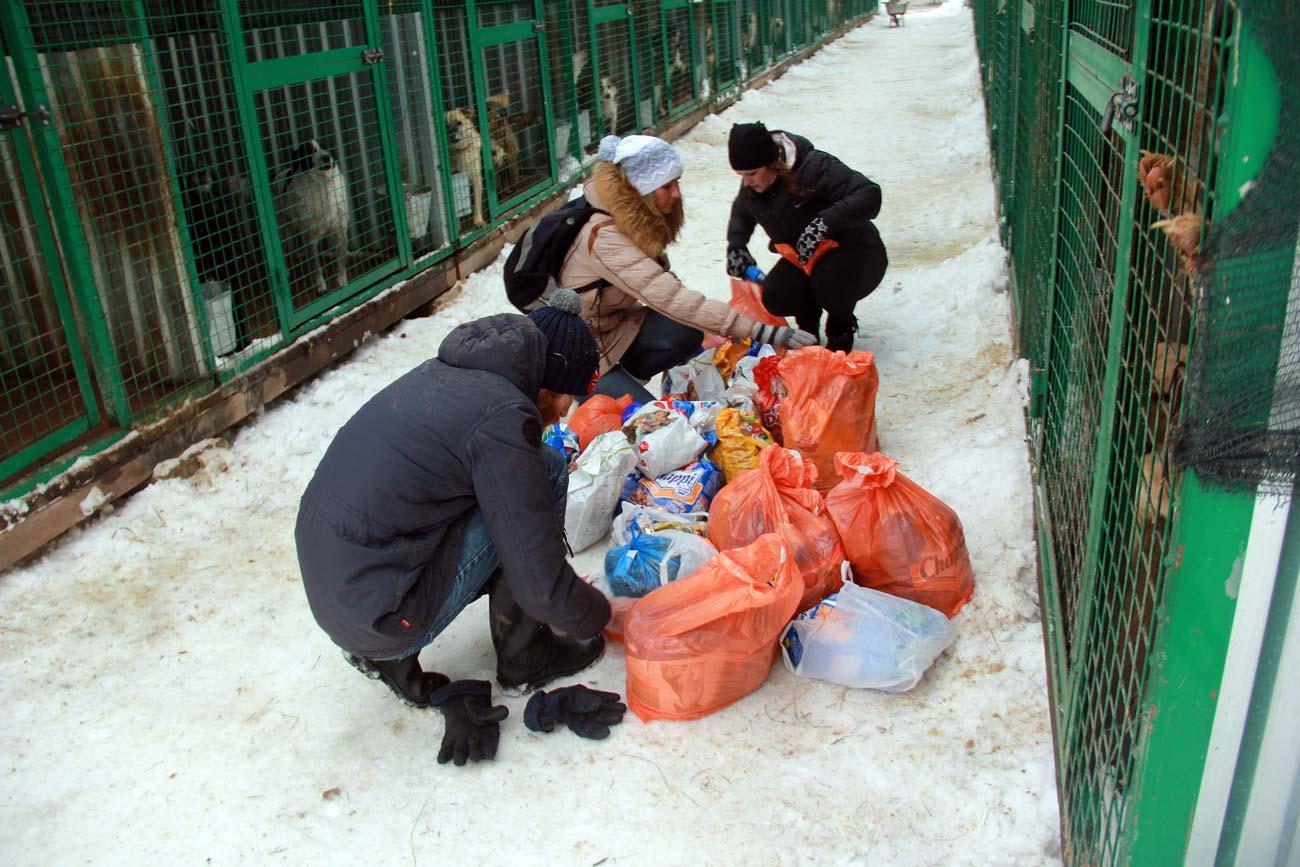 Cachorros recolhidos nas ruas recebem comida em abrigo Foto: Divulgação
