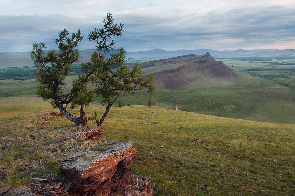 Снимка: Александър Нерозя