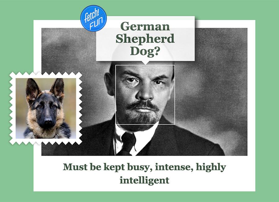 Vladimir Lenin (Russian communist revolutionary, politician, and political theorist) as German Shepherd Dog.