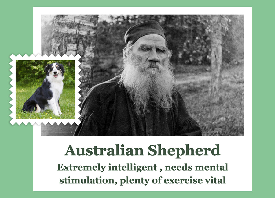 Leo Tolstoy ( Russian writer who is regarded as one of the greatest authors of all time) as Australian Shepherd.